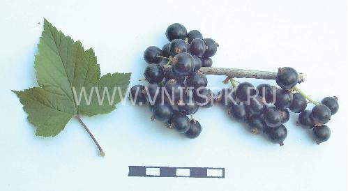 Бирюлёвская