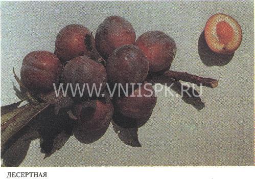 Десертная (Никитская красная 804, Консервная 804, Десертная консервная)
