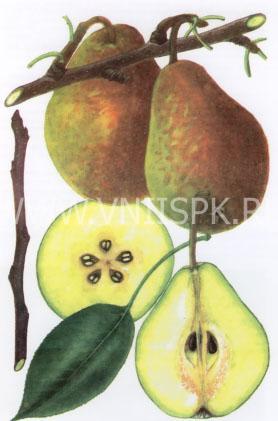 Лесная красавица (Александрина, Мари-Луиз)