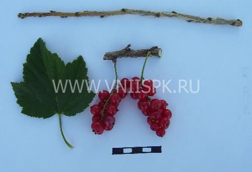 Задунайская (Красная Смольяниновой)